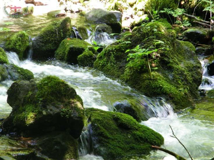Боржоми Харагаульский парк