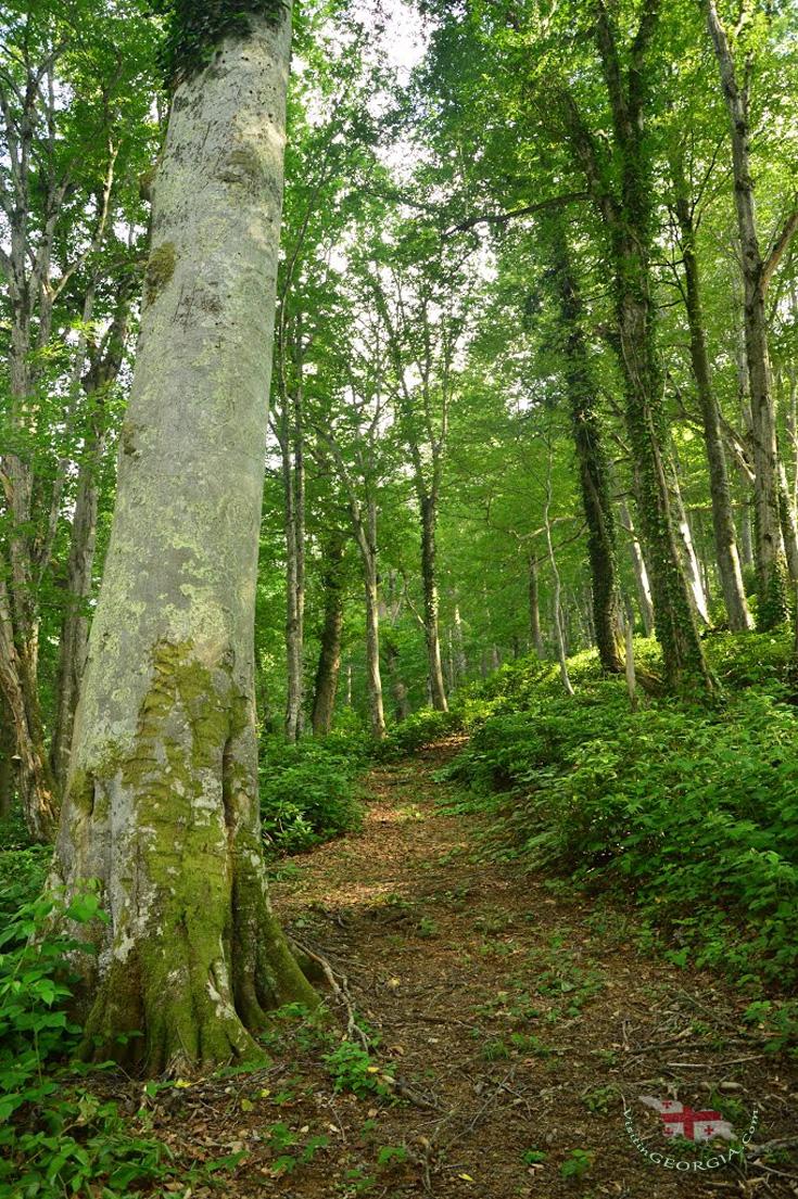 Mtirala National Park